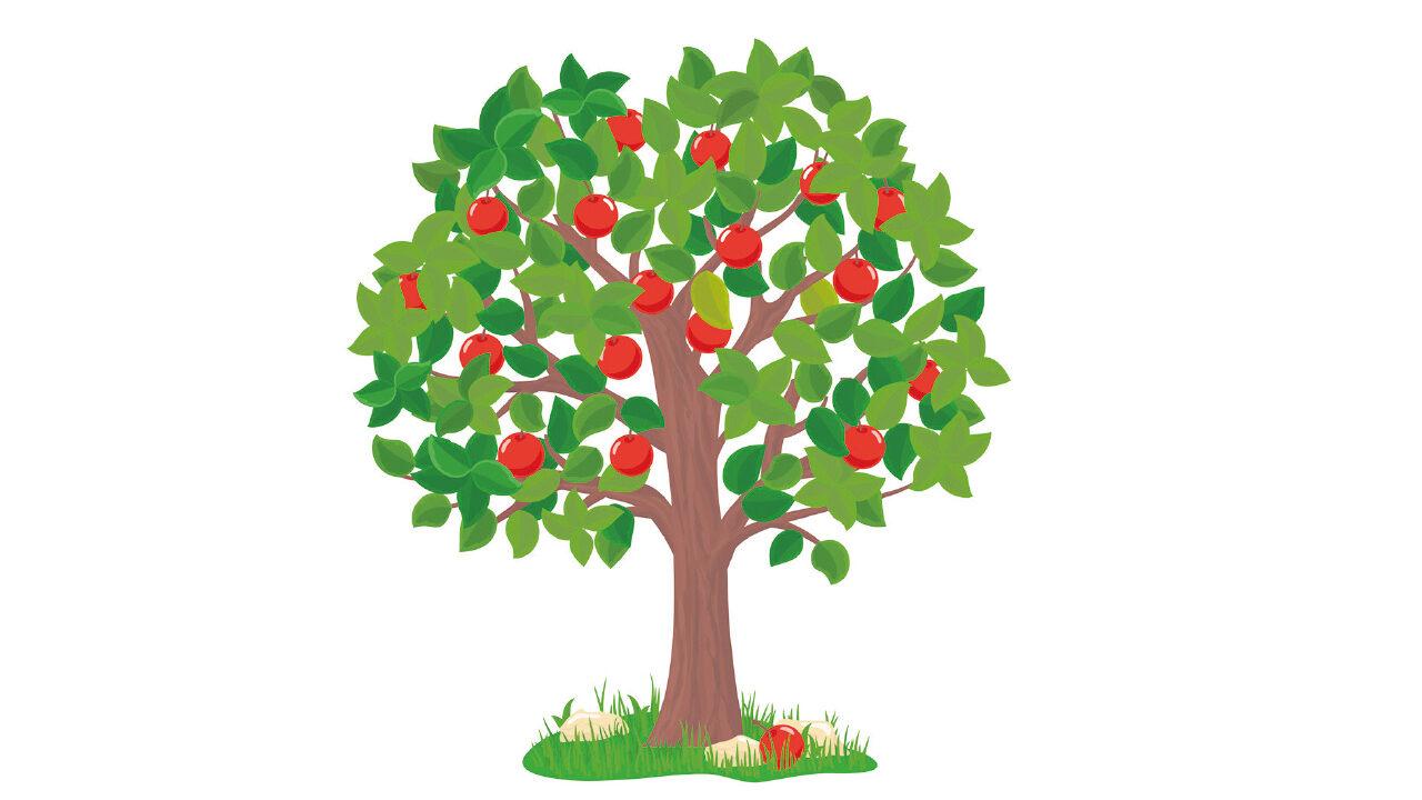 piirros omenapuu